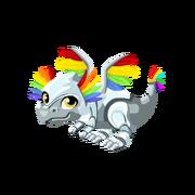 Rainbow Sentinel Juvenile