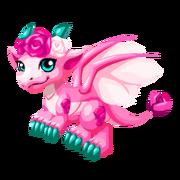 Pink Rose Juvenile