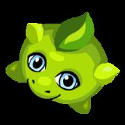 Succulent Baby