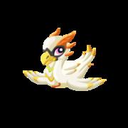 Swan Juvenile