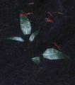 Blood Lotus (screenshot).png
