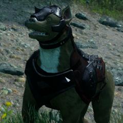 Hessarian Hund