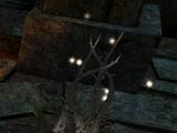Феландарис (Dragon Age II)