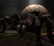 Monstrous spider