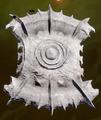 Darkspawn-Shield-Crafted.png