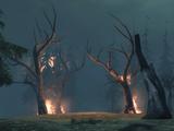 Forest Path (Awakening)