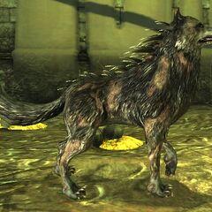 Ein Verderbnis-Wolf