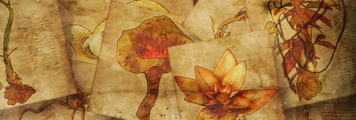 Herbs Quest Banner