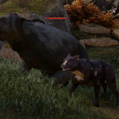 Ein Mabari direkt neben einem Gewaltigen Bären in den Hinterlanden