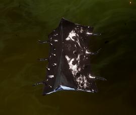 Щит вожака порождений тьмы (3 уровень)