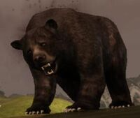 Créature-Ours noir5