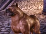 Пёс (Origins)