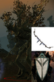 Heart of the Forest.png