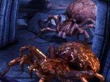 Kodeks: Olbrzymie pająki