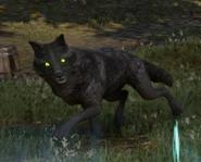 Schwarzer Wolf 02
