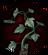 Эльфийский корень (Inquisition иконка)
