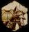 Inquisition-Heavy-Armor-Schematic-icon1
