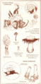 Varieties of Deep Mushrooms.png