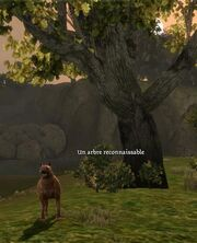 Écran-Un arbre reconnaissable