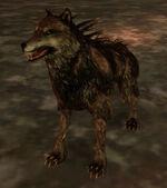 Моровой волк