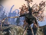 Сердце леса (квест)