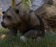 Gewaltiger Bär 02