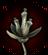Ария вандала иконка
