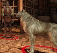 Opposant-Maître-chien