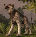 Creature-Wolf.png