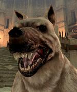 Пёс DAII