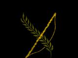 Кодекс: Сага об Илорене