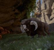 Wo die Bisents grasen - Druffy
