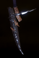 Ornate Staff Blade.png
