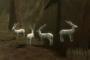 Halla Forest