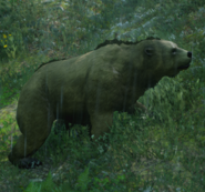 Bär 03