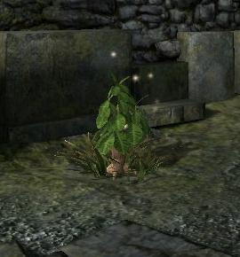 Эльфийский корень (Dragon Age II)