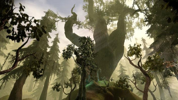 Area-Brecilian Forest