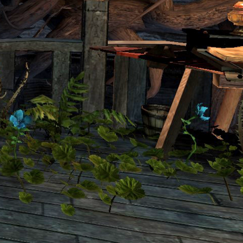 A couple of Harlot's Blush flowers grow through the floor of the <a href=