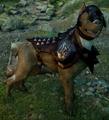 Hessarian hound mabari.png