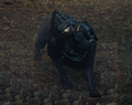 Armored Mabari.png