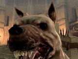 Pies (Dragon Age II)