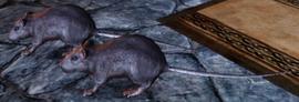 Creature-GiantRat