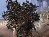 Древний сильван