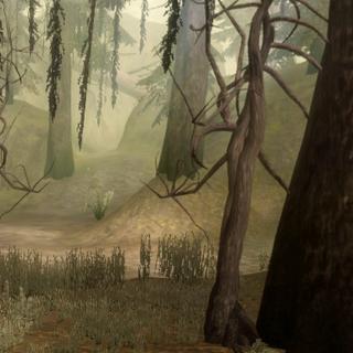 Westlicher Teil des Waldes