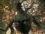 The Grand Oak