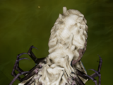 Spinnen-Requirierung: Oase