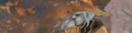 Cole Quest Banner.PNG