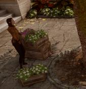 Romantik pur - Elfische Gärtnerin