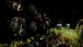 Bearheads.png