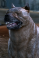 Dog image.png